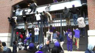 Ravens Fans Climb Fence to Sneak In Stadium!